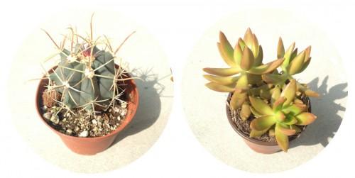 How to: Potting Terrarium Style Cactus