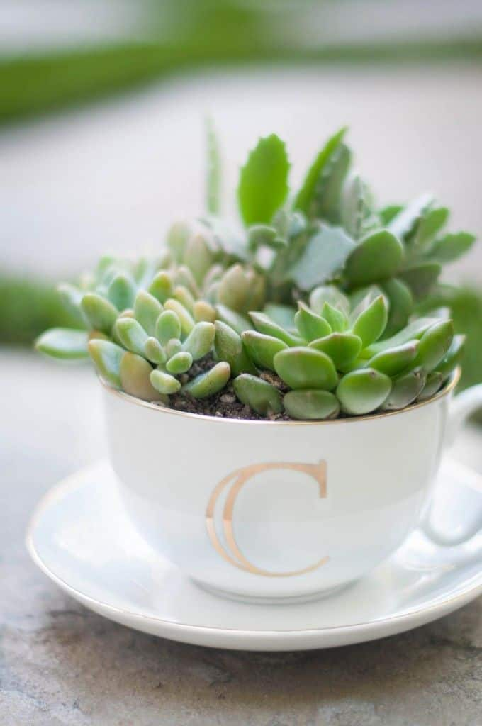 12 Handmade Gift Ideas Everyone Will Love - Teacup Succulent Arrangment