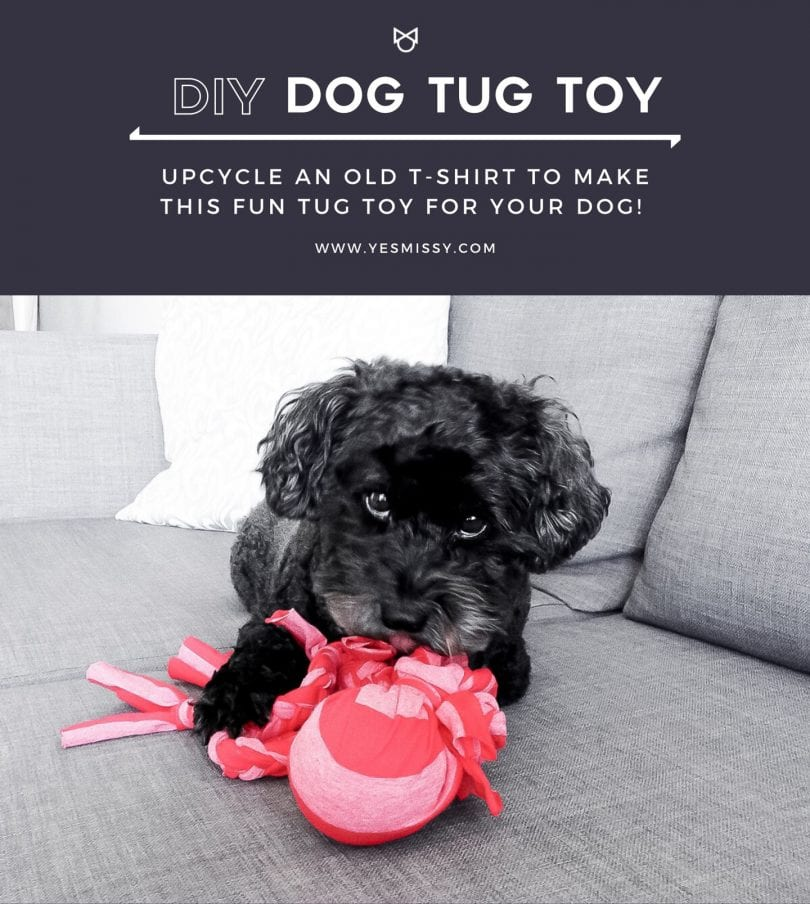 An easy DIY to make a tug toy for your dog.
