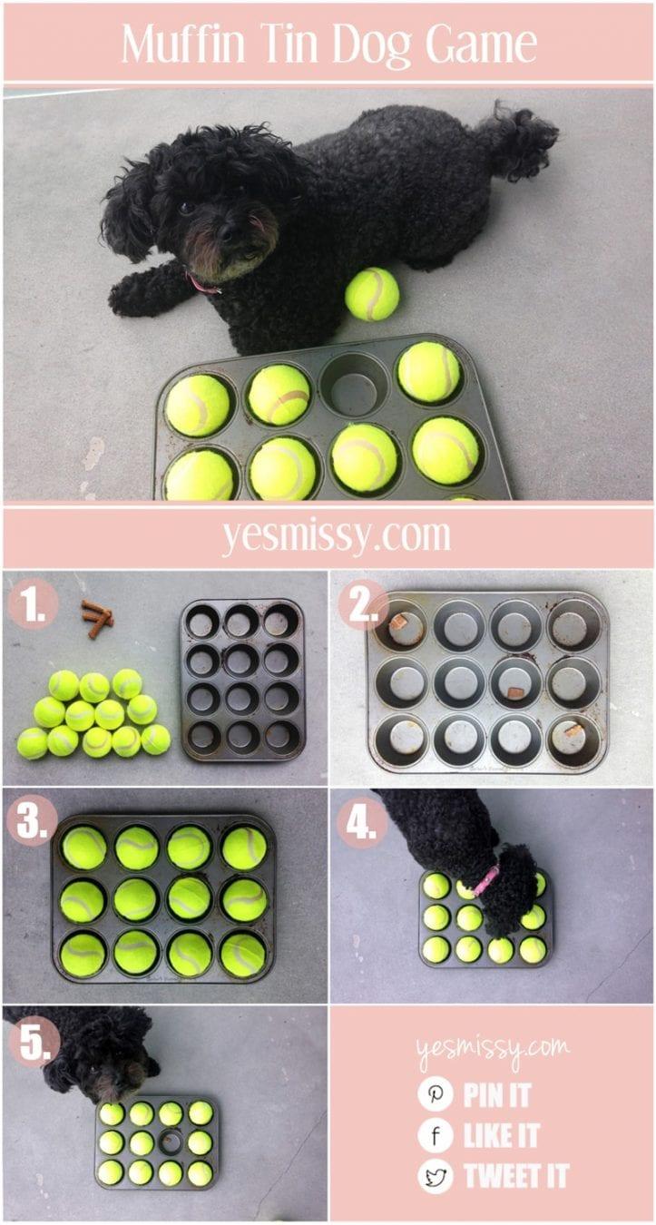 DIY dog game - muffin tin hide and seek