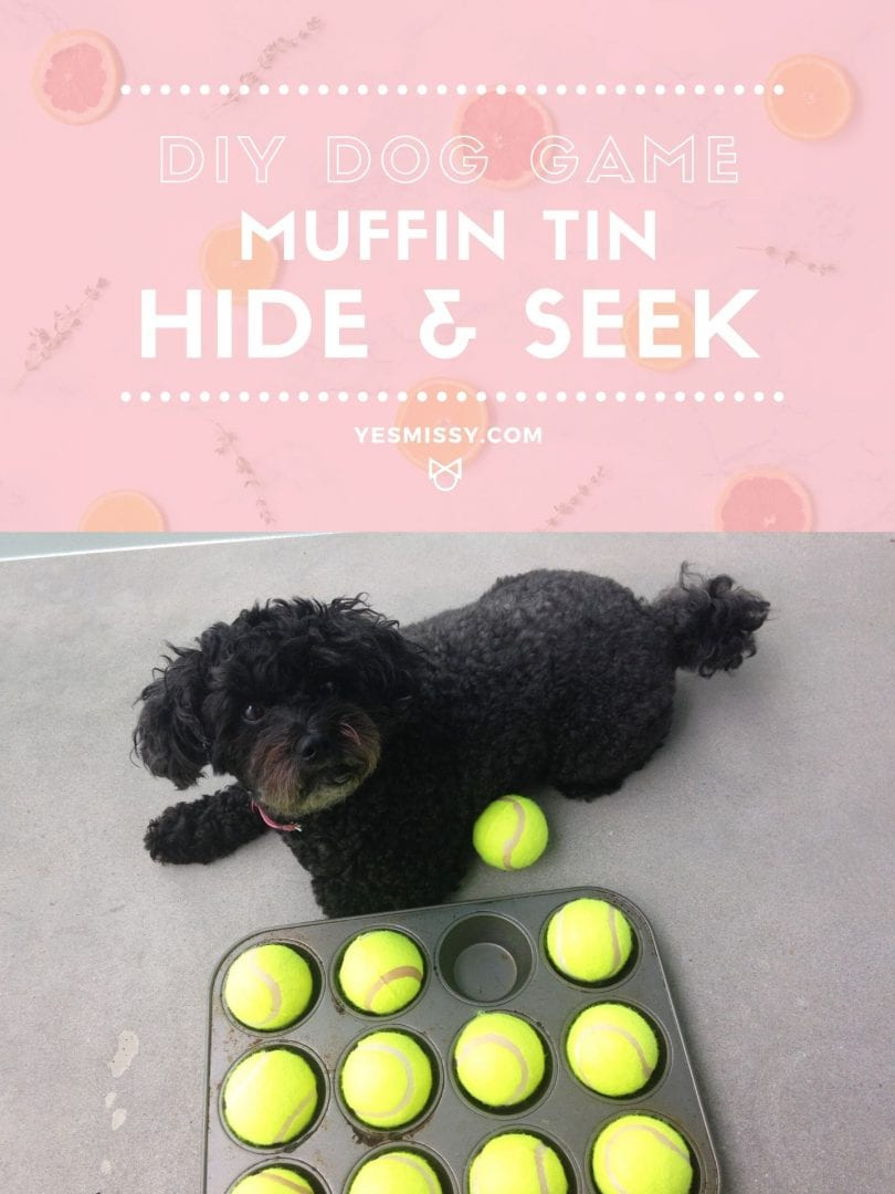A fun DIY dog game idea for your pet- Hide and seek game with a muffin tin and tennis balls