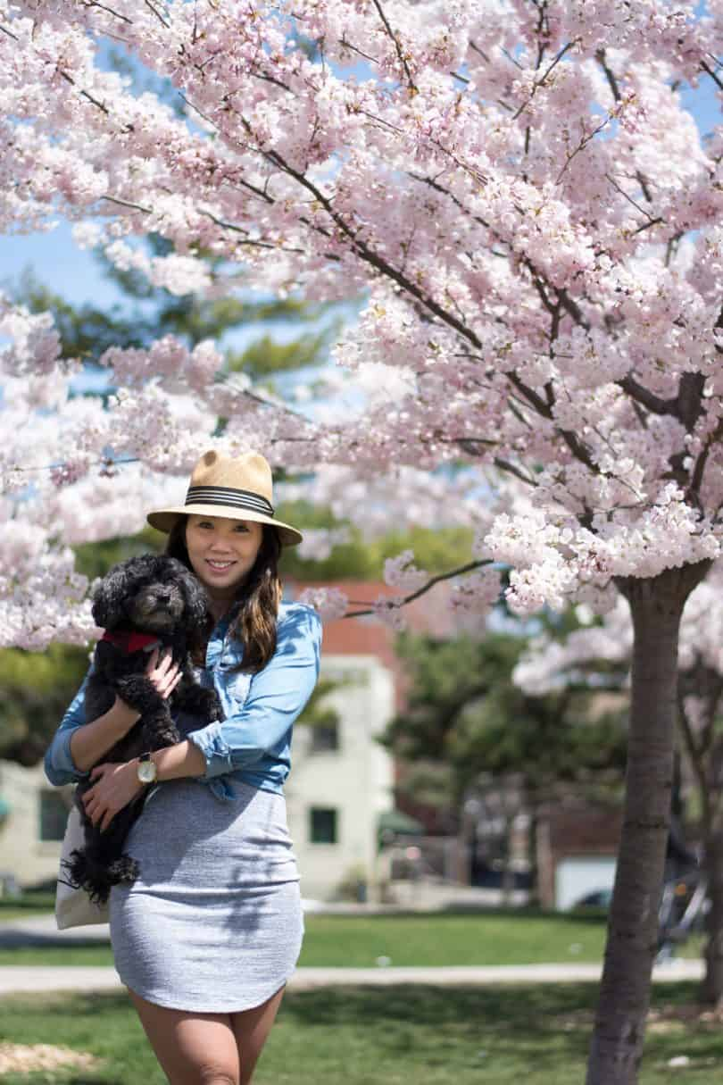 A day in the park with my dog Chloe, it's cherry blossom season in Toronto
