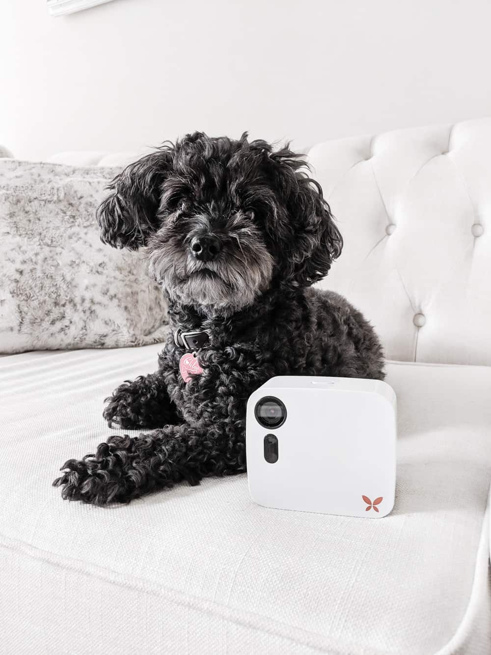 Curious to see what your pet does all day? Ooma Butterfleye allows you to keep an eye on your home, both a wifi security system and a pet camera that...