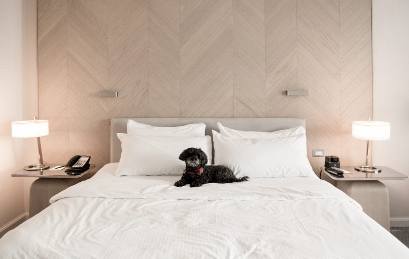 The Intercontinental Toronto is a pet friendly hotel!