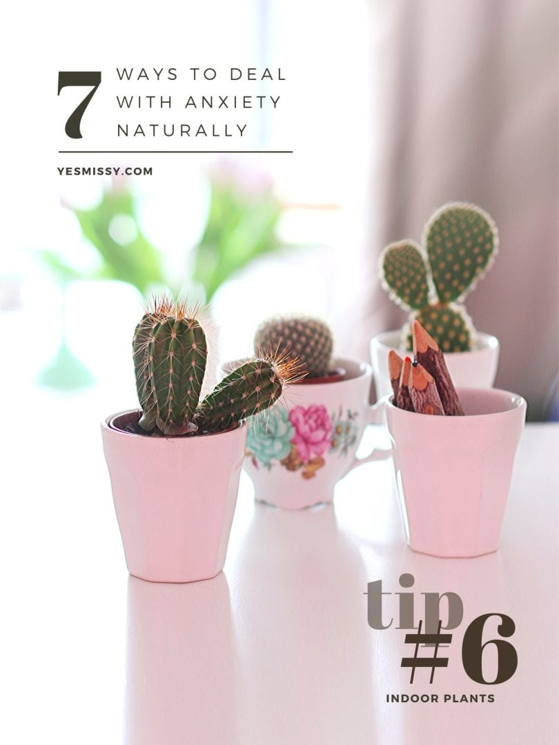 How to relieve stress and anxiety - tip #6 bring a little greenery into your home with a houseplant