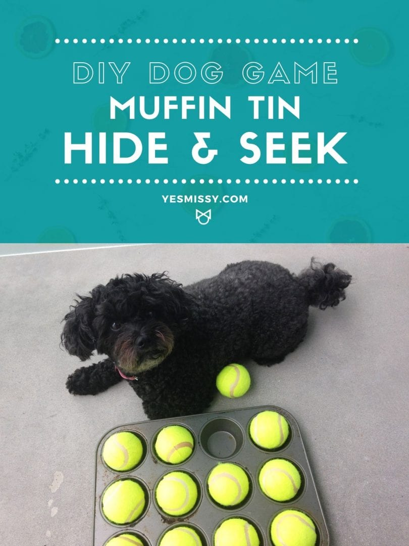 Play this fun DIY dog game idea for your pet. And easy hide and seek game with a muffin tin and tennis balls.